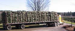 Truck leaving to deliver Christmas trees to Massachusetts